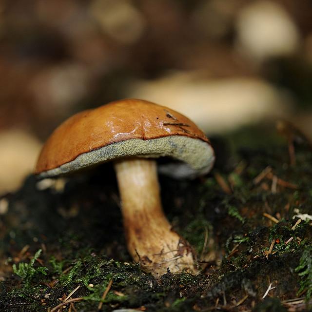 Pilze sammeln in und um Leipzig